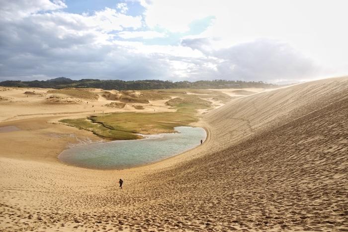 砂丘に降った雨が、砂丘列に挟まれた低地に地下水として湧き出し、池が出現する「オアシス」は、晩秋から初秋にかけて見られる期間限定の光景。夏になると池は無くなり、湧水のつくる小川が尻無川となり、砂地に浸透してしまうので、池が見られるシーズンを狙って訪れてみてはいかがでしょうか。