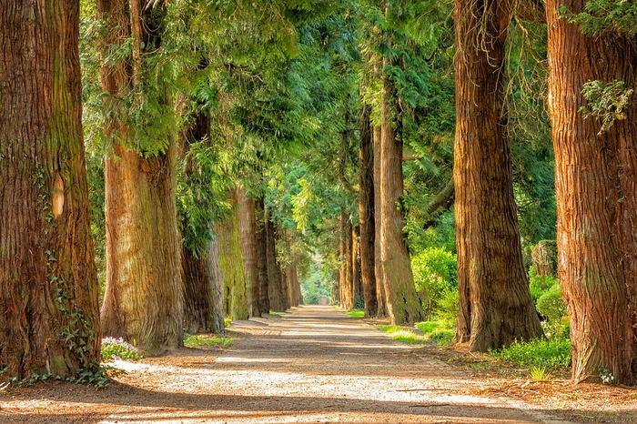 公園の木々の間に立ってみると風が渡る音を聞くことができます。いつも通る公園の道で、ふと立ち止まってみるといいですね。