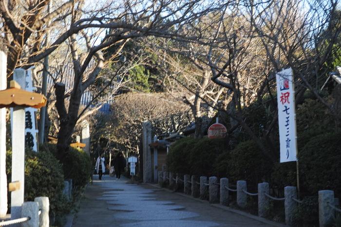 重要文化財の寺宝を多数保有する「宝戒寺」。宝戒寺は萩をはじめ、梅や桜など季節の花々を楽しむことができるお寺です。
