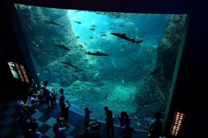 新江ノ島水族館のおすすめは、水深6.5メートルある相模湾大水槽と、有人潜水調査船・しんかい2000を常設展示する「深海コーナー」です。  相模湾大水槽(画像)では、波を造る装置や偽岩を使って、相模湾の自然環境をを忠実に再現。約8,000匹のマイワシの大群も間近で見ることができますよ。分かりやすく解説してくれる、飼育員さんのトークライブも行われています。