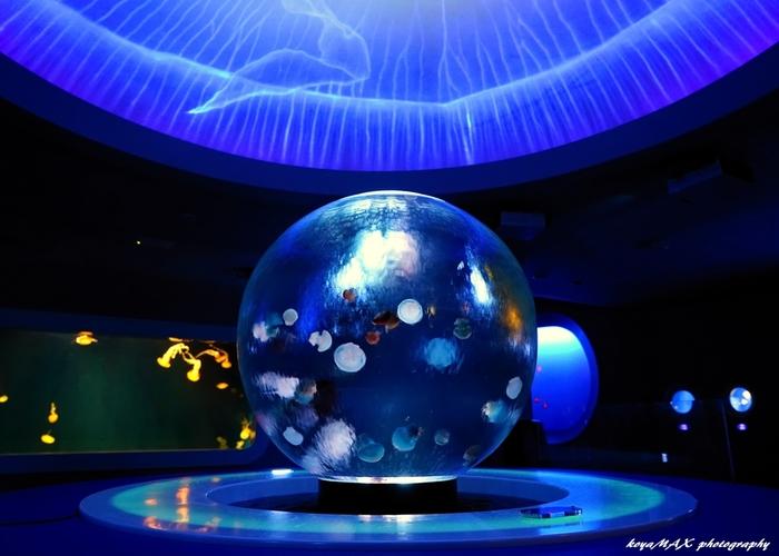 クラゲに力を入れていることでも有名で、球型水槽の中でただようクラゲを鑑賞できる、癒しの空間も。