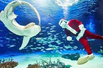 """サンタとトナカイに扮したダイバーが大水槽にもぐり、お魚たちに野菜を""""プレゼント""""する水中パフォーマンスタイムもあります。クリスマス気分が高まりますね。"""