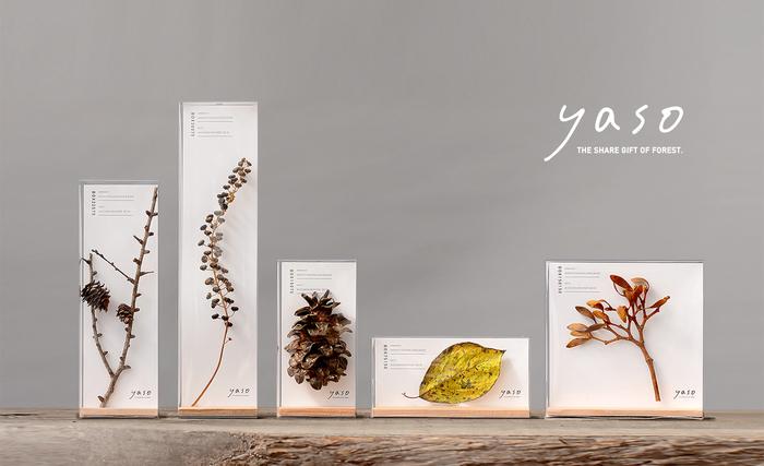 yasoプロジェクトの手始めに作られたのが、枝葉や木の実を透明の容器に閉じ込めた「yaso BOX」。これらはすべて、木葉社が木をめぐる仕事の中で出会った森のカケラたちです。