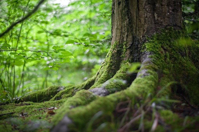 山林は自然に存在するものではなく、先人が木を植え、それを脈々と受け継いで手入れをしてきたもの。動植物のゆりかごとなり、水を蓄えて地域を潤す、わたしたちの財産です。