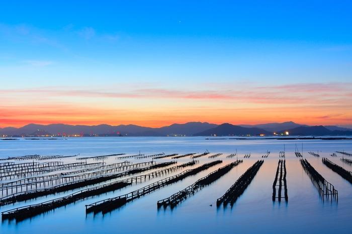 牡蠣の旬は種類によって違い、真牡蠣が11~4月、岩牡蠣が7~9月となっています。旬の牡蠣はしっかりと栄養を蓄えるので、大粒でぷりっとした食感を堪能できますよ。牡蠣生産量日本一の広島には、冬だけでなく夏も美味しく食べることができる「かき小町」といった品種もあります。やはり冬がイチオシですが、夏の牡蠣もぜひ食べ比べてみたいですね。
