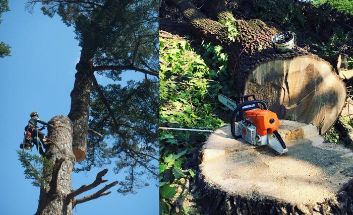 株式会社木葉社は、高い知識と技術を持つ樹木の専門家・アーボリストとして、木にまつわる全ての仕事をおこなう樹木のエキスパート。そんな彼らから見た日本の山林には、わたしたちが思っている以上の価値があるんだとか。