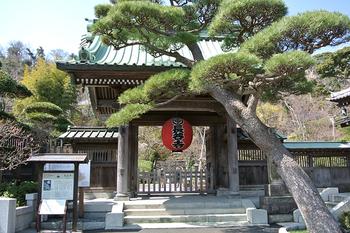 続きましては鎌倉の観光名所でもある「長谷寺」です。長谷寺には高さ約9メートルのとても神々しく美しい十一面観音菩薩像や厄除け阿弥陀、観音ミュージアムなどがあり、見所も沢山のお寺です。