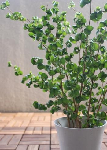 たとえば、「観葉植物」(グリーン)。  癒し効果が期待できる観葉植物は、見たり触れたりするだけで気持ちが落ち着きますよ。  大きな観葉植物を置きたいけれど、お部屋の狭さに悩んでしまう…という方は、寝室のベランダ(ベッドから見える場所)に置くだけでもOK!  ちなみに、風水では「グリーン」は、健康運をアップさせる色と信じられています。  快眠を得るためにも、グリーンをベッドのそばに置いてみませんか?