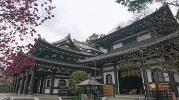 ここ長谷寺は出世や商売繁盛の「大黒天」のお寺です。階段を登り眼下に広がる由比ヶ浜の美しさも見所の一つです。とても居心地がよく、季節の花々が楽しめる花にあふれたお寺なんです。