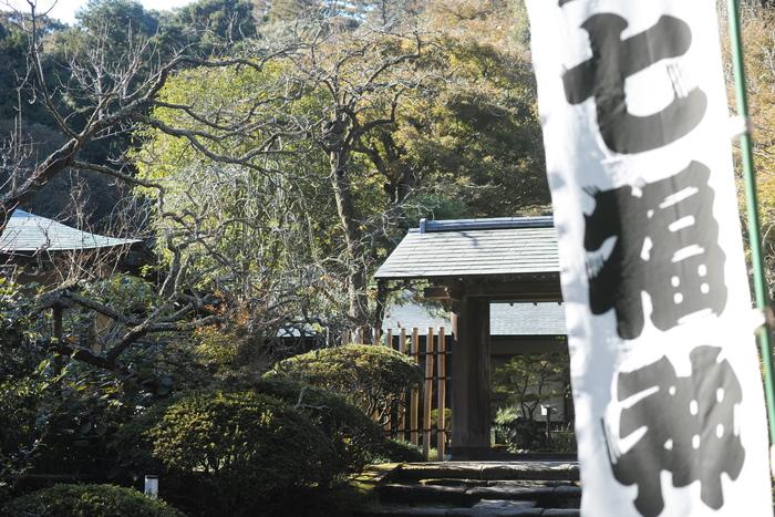 浄智寺は13世紀の終わりころ創建され歴史も古く、境内は名勝史跡に指定されたやぐらがあったりと見所も満載です。