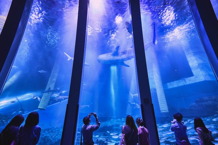横浜・八景島シーパラダイスは、東日本で唯一となる世界最大の魚「ジンベエザメ」や、シロイルカの飼育展示で有名。  施設の構成も特徴的で、『アクアミュージアム』『ドルフィン ファンタジー』『うみファーム』『ふれあいラグーン』という4つの水族館をめぐって、楽しめるようになっています。とても1日では回りきれないほどの広さと展示ですね。  なかでも圧巻なのは『アクアミュージアム』で、700種類、12万点の生きものたちが生活する環境づくりが整えられているんです。こちらでは数万尾のイワシたちの群れも楽しめますよ。
