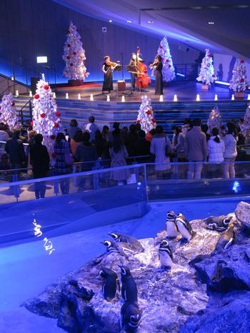 期間中、12/22~12/24は「ペンギンと音楽の夜」を同時開催。プロジェクションマッピングを楽しみながら、新日本フィルハーモニー交響楽団による生演奏に酔いしれることができますよ。  クリスマスソングの生演奏といっても、この時期のよくある催しと考えがちですが、ここは水族館。生演奏中に、時折ペンギンの鳴き声が入ることも!?思わず笑顔になりますね♪