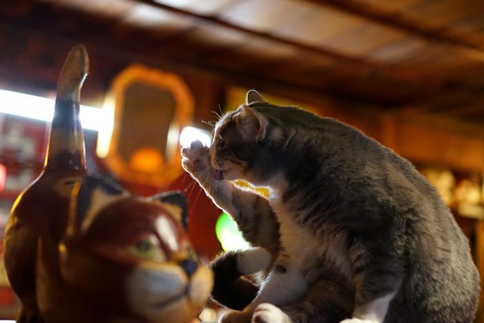 と思ったら、「ホンマのネコもいてるやん♪」 『福猫堂』では、3匹の看板ネコちゃんがお出迎えしてくれます。人馴れしているので、撫でさせてもらえますよ。