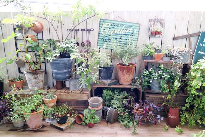 葉の形も育ち方も全部異なるグリーンは、同じ形でキッチリ並べる必要はありません。大きさも素材もさまざまな鉢ですが、「素焼き風」といったざっくりとしたテイストを揃えるだけで不思議と統一感が出ます。木箱などを活用して高さを変え、リズム感をもたせましょう。