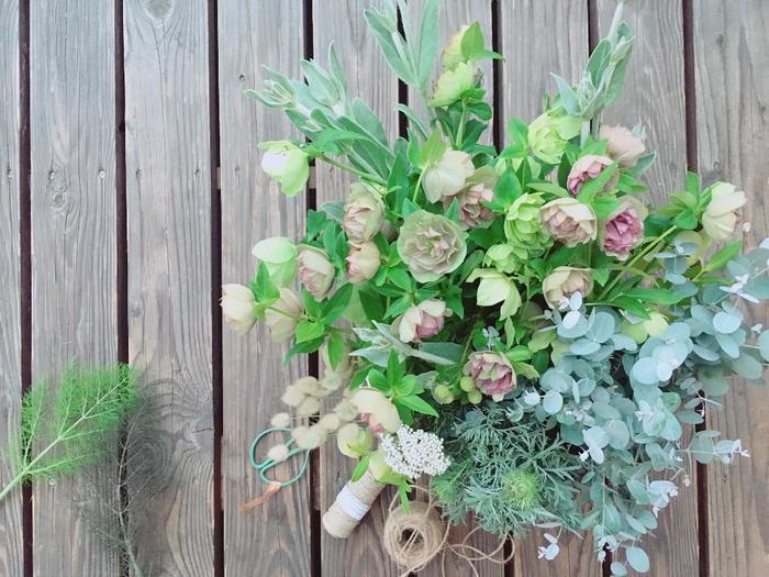 寒い冬に美しい花を咲かせる『クリスマスローズ』は、鉢植えや庭植えをはじめ、リース・ブーケ・ドライのアレンジも楽しむことができます。 原種のニゲルや交配種のハイブリッド系など様々な品種の中から、ぜひお気に入りを見つけて育ててみませんか?