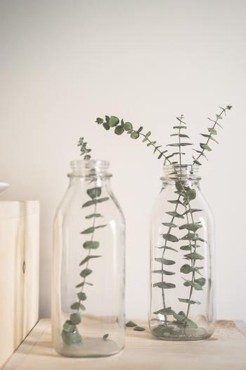 見た目にも癒されるユーカリの葉など、アロマの代わりにハーブの植物をバスルームに飾るのもオススメですよ。