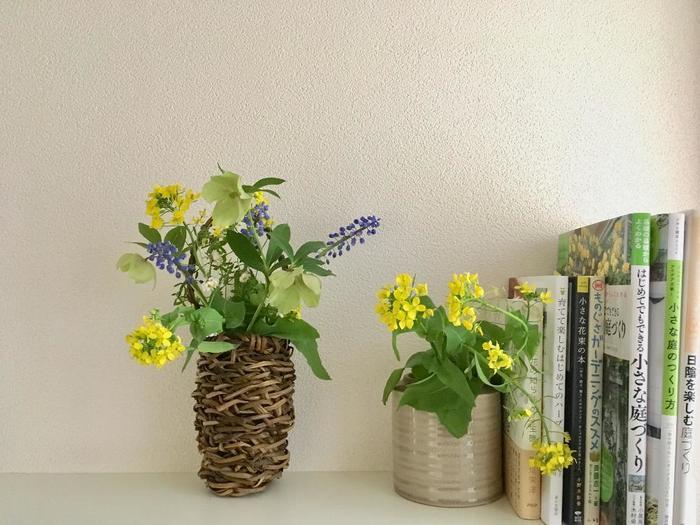 春先まで綺麗な花を咲かせるクリスマスローズは、菜の花やムスカリと一緒に活けて楽しむこともできます。グリーン・イエロー・紫の組合せが、春らしくて爽やかな印象ですね。