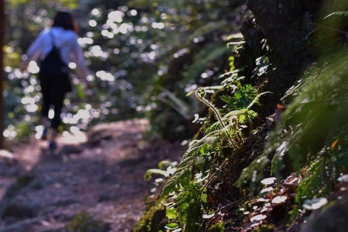 まず1つ目は「登山」です。高尾山には見所が異なるたくさんの登山コースがあるんですよ! こちらの情報については、後ほど詳しくご紹介しますね!