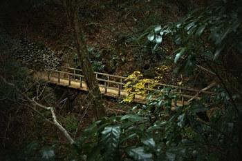 """3、4号路は、山腹にある""""浄土門""""というところから右、左と別々に分かれ山頂を目指すコースです。  3号路は全長2,4kmで往復2時間ほど。高尾山のマイナスイオンをたっぷり感じられる自然が満喫できるコースとなっています。  4号路地は全長1,5kmで往復2時間ほどです。途中「吊り橋」があって、短いコースながら見所は満載ですよ!"""