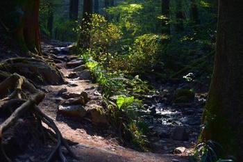 """6号路は全長3,3kmで往復2時間半くらいです。水行道場でもある""""びわ滝""""や、飛び石で沢の中を登っていく場所など、水が流れる道を歩くことができます。  稲荷山コースは全長3.1kmで往復3時間くらい。1番険しいコースですが、山頂までの途中にある展望台からの見晴らしは抜群に綺麗です!"""