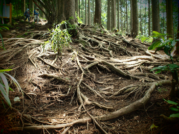 高尾山には1〜6号路と稲荷山コースがあります。それぞれのコースの特徴を簡単に説明すると、1、6号路と稲荷山コースは、高尾山口駅からスタートして山頂まで歩きます。