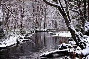 初夏は新緑美しく、秋は色鮮やかな景色で魅了する奥入瀬渓流。でも、雪に包まれた様子も絶景。水墨画のような世界が広がります。
