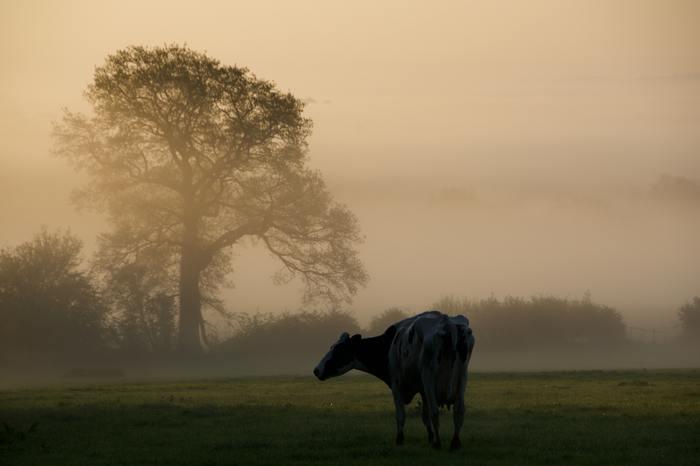 「十牛図(じゅうぎゅうず)」とは、牛を主題として悟りへの道筋を描いた図です。十牛図では牛は「悟り」の象徴として描かれていて、牛を探して捕まえ、自分のものにし執着を忘れてあるがままを受け入れることが一連の流れになっています。  座禅によって自分がどう変わっていくのかイメージがわかない人は、まず十牛図を参考としてみるといいでしょう。
