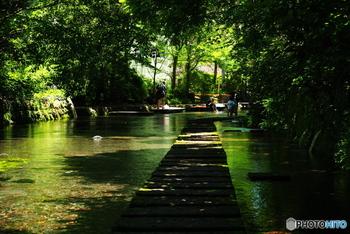富士山からの湧き水が街にある川に流れ、水の都としても有名な静岡県三島。ここに、パワースポットとも呼ばれる「三嶋大社」があります。春には枝垂桜、秋には境内の大きな金木犀の花が香り、豊かな自然と歴史を感じられるスポットです。都内からなら日帰りもできる距離です。