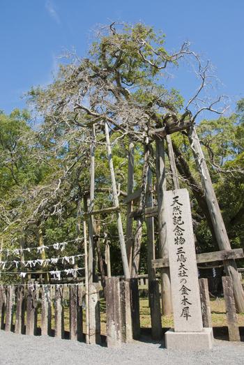 境内にある金木犀は樹齢1200年といわれ、現在でもっとも長寿でもっとも大きな木犀として知られているそう。国の天然記念物の指定を受けています。秋には黄金色の花つけ、2度の花の満開で長く香りを楽しませてくれるそうです。