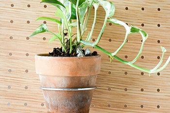 輪っかの形をした「PEG POT RING」と使うと、こんなふうに鉢植えを飾ることもできます。デスクの上はもちろんのこと、玄関やキッチンなど様々な場所で活躍してくれますよ。
