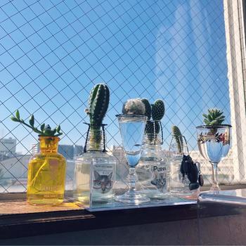 ガラス容器を工夫すれば、インテリア性がより高まります。グラスやビーカー、フラスコ、漏斗なども使えそうですよ。アレンジが楽しいですね。