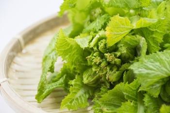 高菜は冬が旬の葉物野菜で、現在は九州を中心に栽培されています。日本では古くから栽培されており、なんと平安時代にはすでに栽培が始まっていたといわれているんです。