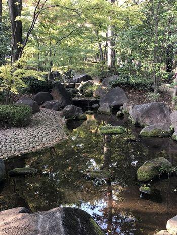 荻窪駅の南口から10分ほど歩くと「大田黒公園」があります。昭和56年に開園し、入り口に門を構える風情ある公園です。きちんとお手入れされているので、四季折々の自然の景色や回遊式日本庭園をゆったり楽しめます。  またバスに乗れば、公園の約半分を池が占め、水鳥も訪れる「善福寺公園」にも行けますよ。面積は約7万8000平方メートルと広大ですが、こちらも四季折々の風景が楽しめる市民の憩いの場となっています。  緑豊かで、閑静な住宅街が広がる荻窪は、都会の喧騒から離れてのんびりしたいときにぴったりのスポットなんです♪