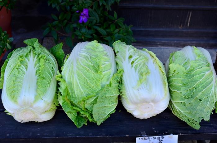 鍋や煮物には欠かせない白菜。煮込んでトロトロになった甘味たっぷりの白菜は本当に美味しいですよね。白菜にはビタミンC、カルシウム、マグネシウム、カリウムなどが含まれ、免疫力向上、感染症の予防、疲労回復、美肌効果などが見込めます。さらに風邪を引いたあとの咳止めに効果を発揮するので、風邪が流行する時期は積極的に取り入れましょう。
