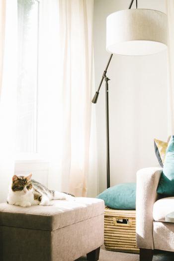 ペットは大事な家族の一員。それぞれのおうちの事情はありますが、抜け毛が嫌だからソファに乗らないで!なんて言わずに、好きなところでくつろいで欲しいですし、一緒のお布団で眠るのはペットと暮らす醍醐味。だから、みんなで仲良くおおらかに暮らして、お掃除はなるべく効率よく頑張る…そんな風に過ごしていきませんか?