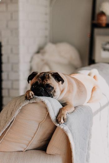 犬猫も人間もみんな快適に暮らせるように、ペットと暮らすおうちのお掃除ポイントを見直してみませんか?