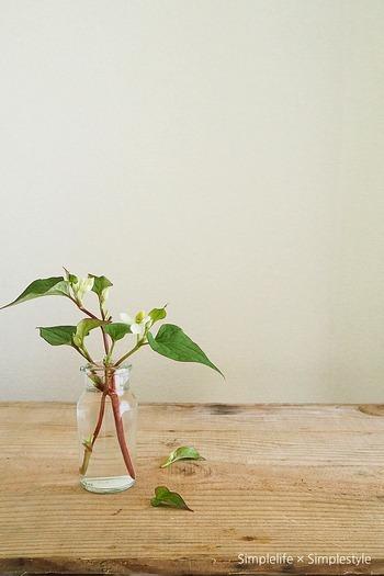 ひとつひとつ写真におさめてみると、潤いのあるお花の風情そのものをダイレクトに感じることができます。
