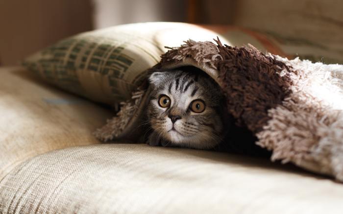 愛らしい表情の猫ちゃんに胸がきゅんとときめきます。カメラ目線ではないのが、アート作品らしい完成度の高さです。