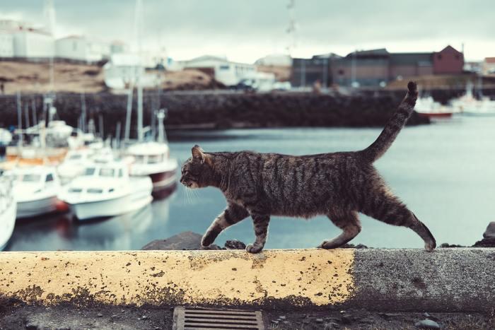 お散歩中の猫を撮影するのは難しいものです。可愛いお顔のアップのほか、全体の動きを撮影しておくと、後で使い勝手がいいんですよね。