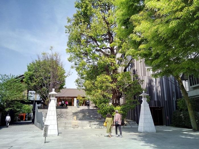 東京・神楽坂にある「赤城神社」は、1300(正安2)年、群馬県赤城神社の御分霊をお祀りしたのを起源とする歴史ある神社です。殖産興業、厄難消除、学問芸術の神として知られる「磐筒雄命」や、「赤城姫命」を御祭神としてお祀りしています。他にも、出世の「おいなりさん」や病気平癒の「八耳さま」なども境内に祀られています。