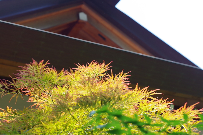 「阿佐ヶ谷神明宮」は、阿佐ヶ谷駅北口から徒歩2分のところにあります。御祭神は、太陽神として知られる天照大御神(アマテラスオオミカミ)。なんと江戸時代からこの地で人々に親しまれている神社で、境内はイチョウやカエデなどの木々に囲まれ、四季折々の季節の変化も見どころたっぷりですよ。