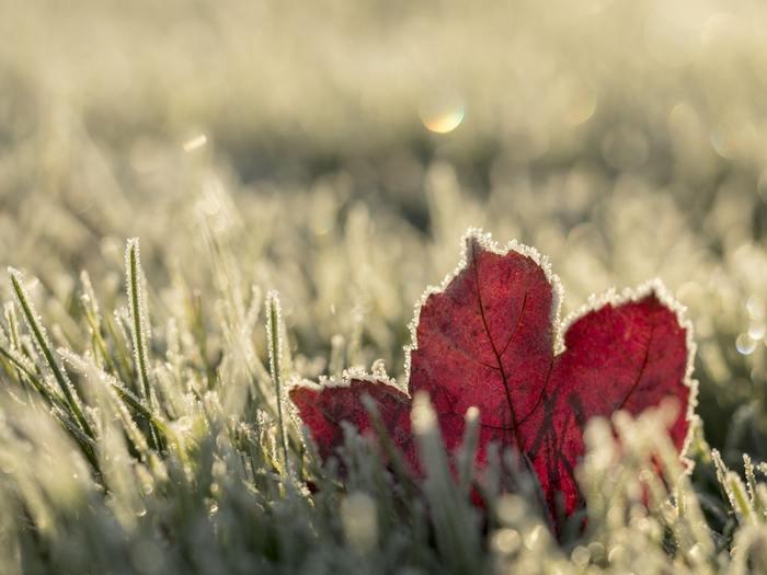 「今年の最低気温を更新しました」といった、ニュースをよく耳にするようになりました。ついつい外の寒さに⾝構えてしまって、たくさん着こみがちですよね。
