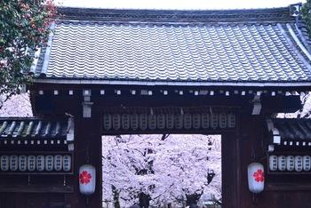 京都で5本の指に入る平野神社の桜。境内には約60種類400本のさまざまな種類の桜の木が植えられています。  桜の門の先には…