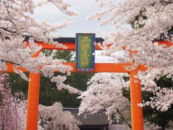 色鮮やかな桜が咲き乱れます。お花見時期の3・4月はたくさんの地元の人や花見客でにぎやか♪
