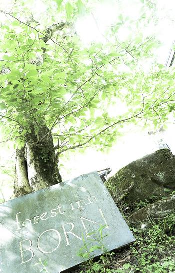 日本を代表する温泉地・湯布院。その北側に位置する塚原高原にひっそりと佇む隠れ家的ホテルです。 森と水の癒しが洗練された空間に溶け合う場所として、人気を集めています。