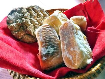 北欧でシェフとして長年修行したオーナーがつくる料理が美味しいことでも有名。会津の旬の食材で作る料理のおかげで、お客さんの体重は、帰るときまでに、ちょっぴり増えているよう……。それでも特にオススメしたいのは、自家製の焼きたてパン。外は香ばしくて中はふわっふわ。少しくらい太っても、食べずに帰るワケにはいかない美味しさです。