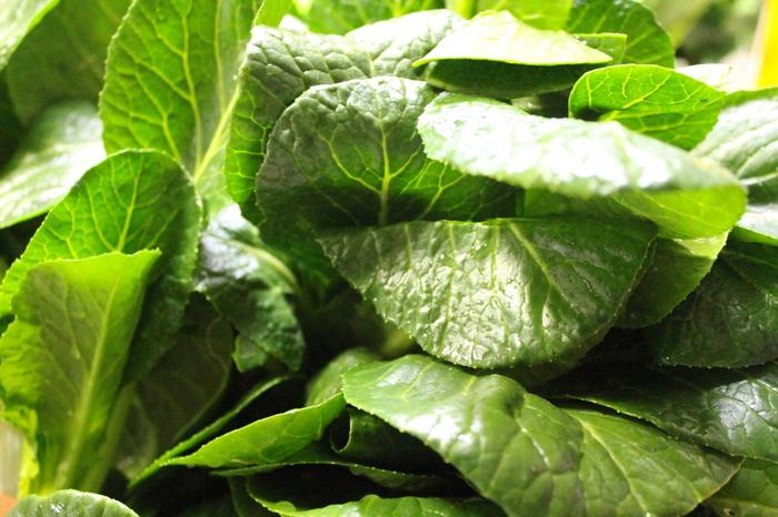小松菜にはビタミンC・E、β-カロテン(ビタミンA)、カルシウム、鉄、食物繊維など人間に必要な栄養素が豊富に含まれています。ビタミンEは血行を良くして冷え性の改善が期待できる栄養素。また、ビタミンAに変わるβ-カロテンは鼻などの粘膜の材料となり、ウィルスの侵入を防いで免疫力アップや風邪予防に効果的です。