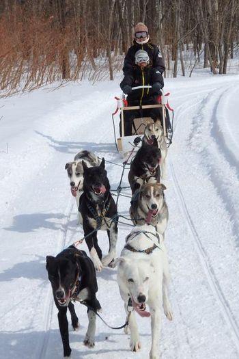 北国の大自然を楽しみたい!動物たちともふれあってみたい!その両方を一度に楽しめるのが、鹿追町での「犬ぞり体験」です。自らがマッシャー(操縦者)となって犬たちを操り、大雪原を駆け抜けます。たっぷり10kmのロングトレイル、しかも2人乗りなので、カップルや親子でも楽しめますよ。初心者でもガイドが並走してくれるので安心。要予約です。