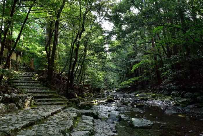 そんな由緒ある伊勢神宮は、建物だけでなく敷地内の木々や川までどこか神聖な雰囲気が漂います。自然と厳かな心持ちになるような伊勢神宮への旅へ出かけてみましょう。