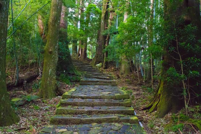 「熊野古道」は熊野三山(くまのさんざん)と呼ばれる熊野本宮大社・熊野速玉大社・熊野那智大社の3つの神社へと通じる参詣道の総称です。道は和歌山県・三重県・奈良県・大阪府にまたがっています。こちらも先ほどの高野山同様、「紀伊山地の霊場と参詣道」として、世界遺産に登録されています。自然豊かな参道を歩いて、心洗われる神社巡りの旅に出かけましょう。